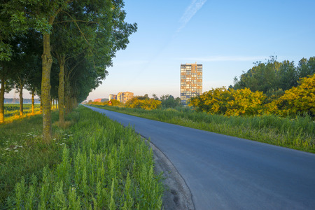 countryside road: Countryside road in the light of sunrise