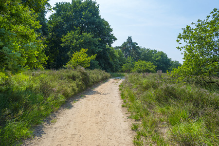 dirt track: Dirt track through a field with heather in summer