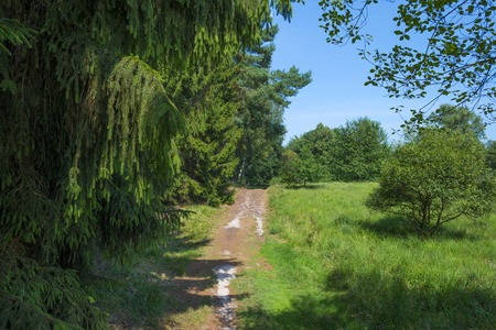 dirt track: Dirt track through a forest in summer Stock Photo