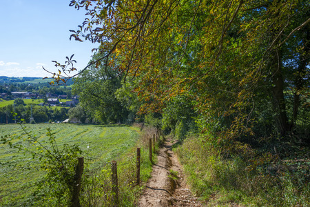 footpath: Footpath along a forest in summer Stock Photo