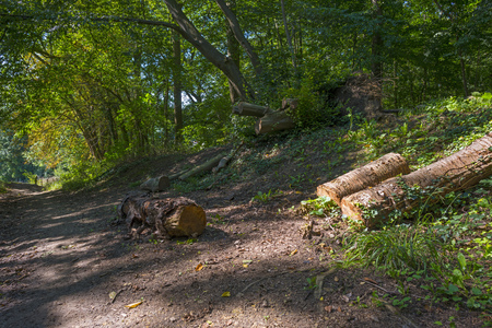 timberland: Path through a forest in in summer Stock Photo