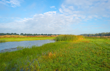 flevoland: Shore of a lake under a blue cloudy sky in autumn Stock Photo