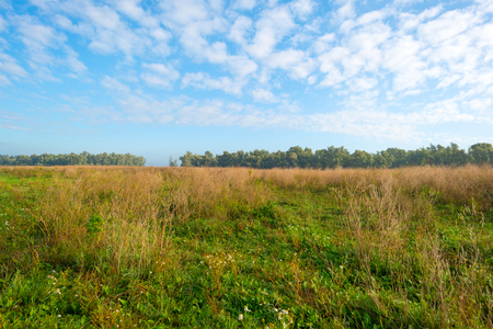 blue and green: Field below a blue cloudy sky in autumn