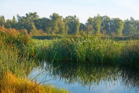 hazy: Shore of a lake under a hazy sky in autumn