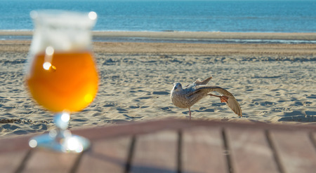 espumante: Gull looking at a glass of foaming beer in sunlight