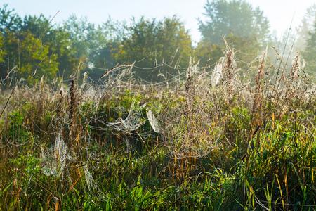 cobwebs: Cobwebs in a hazy field in autumn at sunrise Stock Photo