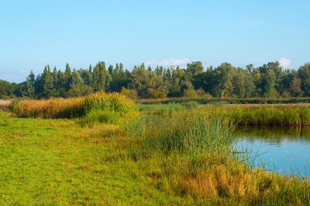 hazy: Hazy sunny shore of a lake in autumn Stock Photo