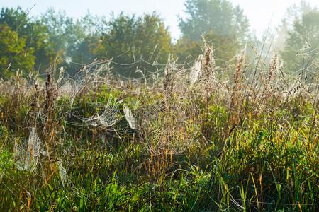 hazy: Cobwebs in a hazy field in autumn at sunrise Stock Photo