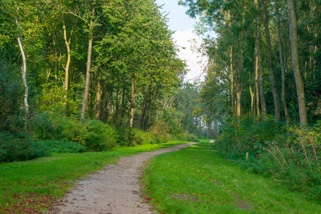 clearing the path: Path through a sunny forest in autumn