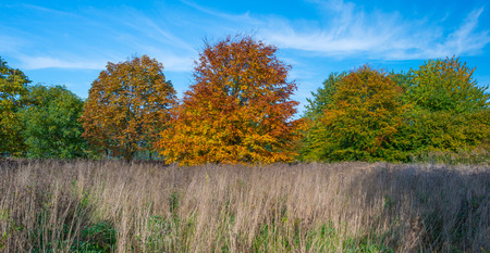 autumn colors: Trees in a field in autumn colors Stock Photo