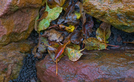 rockery: Detail of a rockery after rain in autumn