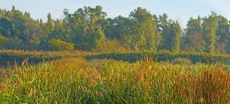 hazy: Shore of a hazy lake in autumn