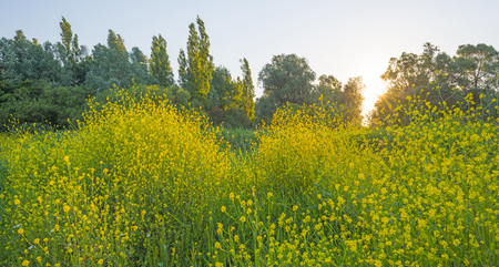 yellow wildflowers: Yellow wildflowers along green trees in summer