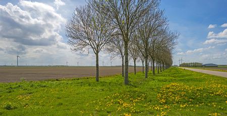 plowed field: Furrows in a sunny plowed field in spring