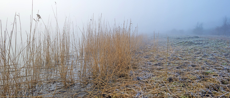 wetland: Shore of a foggy lake at dawn in winter