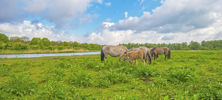 and naturally: Herd of horses in naturally below a blue cloudy sky Stock Photo