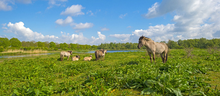 could: Herd of horses in naturally below a blue cloudy sky Stock Photo