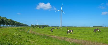 fields of flowers: Herd of cows grazing in a meadow in summer