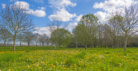 chestnut tree: Chestnut tree in a sunny meadow Stock Photo