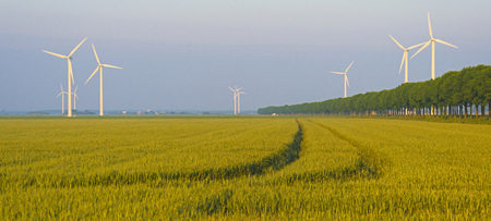 Corn growing on a field in spring