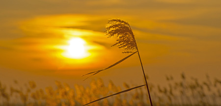 winter sunrise: Sunrise rode in a field in winter