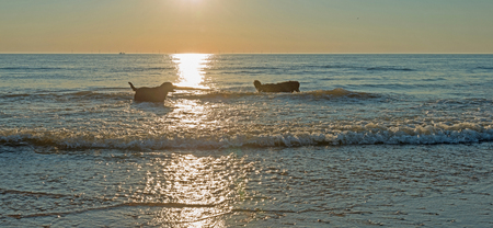 perros jugando: Perros que juegan en el mar al atardecer