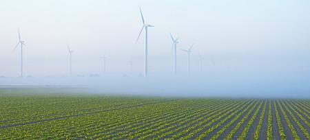 wind farm: Wind farm in a field with crop