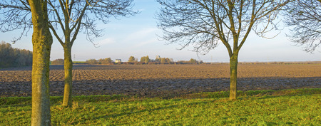 plowed: Trees along a plowed field at sunset Stock Photo
