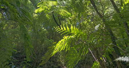 subtropical: Sunny subtropical forest in summer