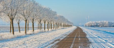 holland landscape: Snowy road in winter under a blue sky