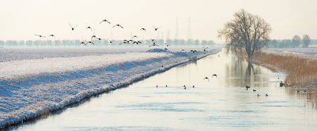 Birds flying over a snowy canal in winter