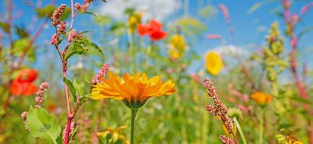 landscape flowers: Wildflowers in a field in summer Stock Photo