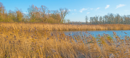 wetland: Sunny shore of a lake in autumn