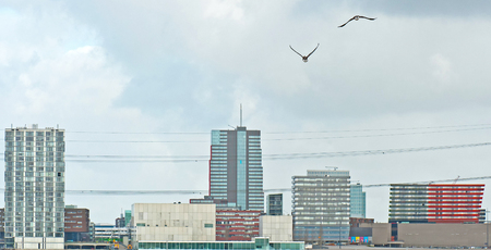 almere: Geese flying over a city in winter