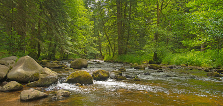 rock stone: Stream through a sunny forest in summer