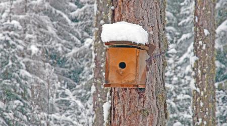 birdcage: Snowy birdcage in a tree in winter
