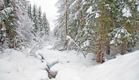 meandering: Stream meandering through snow in winter
