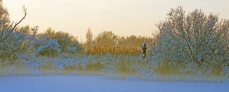 ice sheet: Trees in a frozen landscape in winter Stock Photo