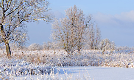 flevoland: Trees in a frozen landscape in winter Stock Photo