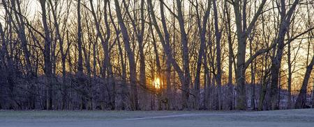 winter sunrise: Sunrise over trees in winter Stock Photo