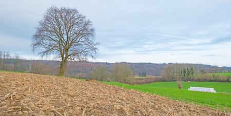 plowed: Sunny hilly plowed field in winter
