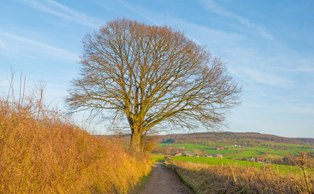 hilly: Path through a rural hilly landscape in winter Stock Photo