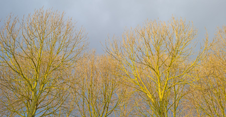 deteriorating: Trees in the sunlight or deteriorating weather Stock Photo