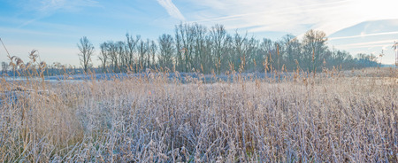 drove: Frozen drove in nature in winter