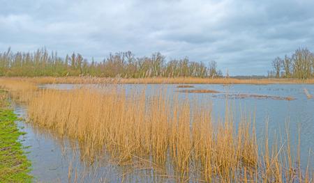 lelystad: Shore of a lake below a cloudy sky in winter Stock Photo