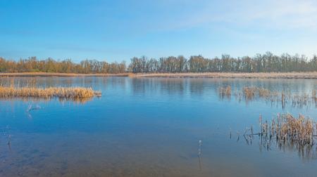 flevoland: Shore of a lake in sunlight in winter