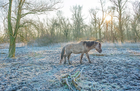 and naturally: Horse in frozen naturally in winter