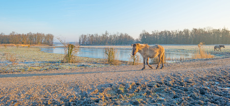 Horse in frozen naturally in winter