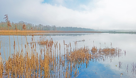 wetland: Shore of a foggy lake in sunlight Stock Photo