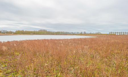 lelystad: Shore of a lake in winter